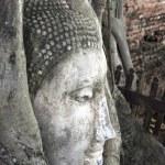 Buddhas head in a tree, Ayutthaya, Thailand — Stock Photo