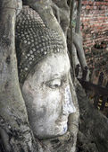 Buddhas head in a tree, Ayutthaya, Thailand — Stock Photo