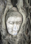 Head of Sandstone Buddha in The Tree Roots at Wat Mahathat, Ayutthaya, Thailand — Foto de Stock