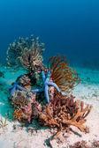 Scape de arrecife submarino — Foto de Stock