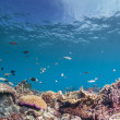 Stock Photo: Underwater reef scape