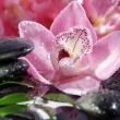 Sea stones on a background of pink orchids — Stok fotoğraf