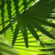 background of palm leaf — Stock Photo