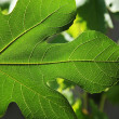 Green leaf close-up — Stock Photo #28496173