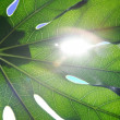 sun breaks through the green leaf — Stock Photo