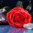 Rose with a shoe — Stock Photo #28513451