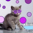 Little cat drinking milk — Stock Photo