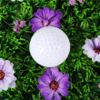 Stock Photo: Golf ball in the grass