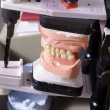 Stock Photo: Jaw in laboratory