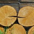 Stock Photo: Tree rings of larch