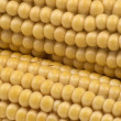 Corn, maize — Stock Photo