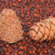 Stock Photo: Two pine cones on nut
