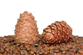 Two pine cones on the nut — Stock Photo