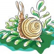 Snail — Stock Vector