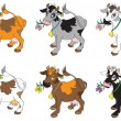 Stock Vector: Set of Cows