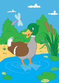 Duck in pond — Stock Vector