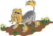 Hairy Dog — Stock Vector