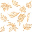 Orange leaves — Stock Vector