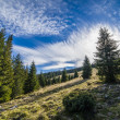 Stock Photo: Alto-stratus and pines