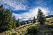 Alto-stratus and pines — Stock Photo