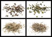 Oolong tea and white tea — Stock Photo