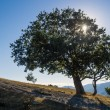 Tree in backlight — Stock Photo