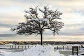 Tree coverd with snow — Stock Photo
