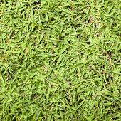Textura de grama — Fotografia Stock