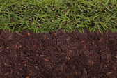 Textura de grama e solo — Foto Stock