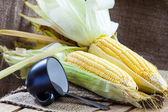 Fresh corns — Stock Photo