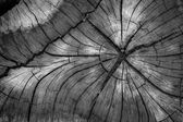 Güdük ağaç — Stok fotoğraf