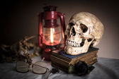 Skull with rose — Stock Photo