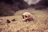 Still life skull — Stock Photo