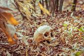 Still life skull — Stock Photo