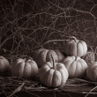 Stock Photo: Still life pumpkins