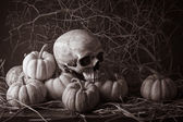 Still life pumpkins — Stock Photo