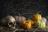 Still life pumpkins — Stockfoto