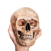 Skull in hand — Stock Photo