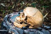 与人类的头颅骨的静物 — 图库照片