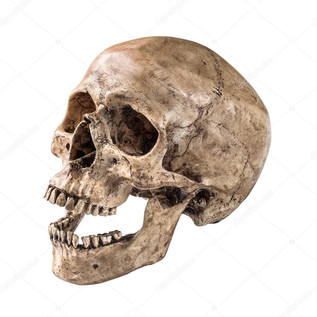Human Jaw Tattoo: Human Skull Side - Google Search