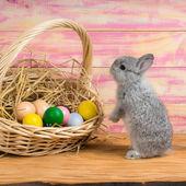Easter bunny — Stock Photo
