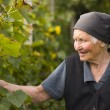 Elderly woman in the garden — Stock Photo