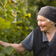 Elderly woman in the garden - Stock Photo