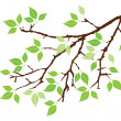 Twig — Stock Vector