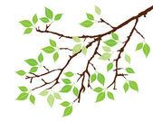 树枝 — 图库矢量图片