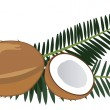 Coconut — Stock Vector