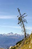 Modrzew małe drzewo z widokiem na góry — Zdjęcie stockowe