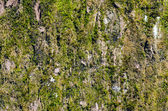 Tree moss — Stock Photo