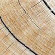 Hardwood log — Stock Photo
