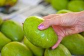 Choosing mangos at the market — Stock Photo
